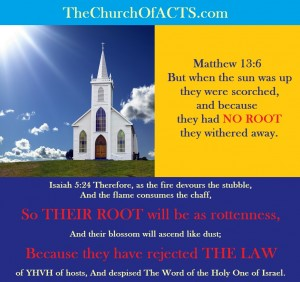 Shabbat Shalom!  They Were Scorched, They Had No Root