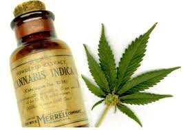 cannabis oil 2